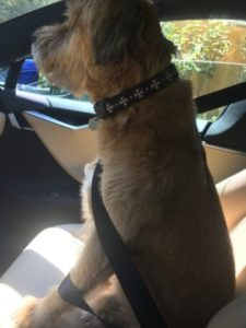 Courage not only has a great home, he also gets to ride in a Tesla
