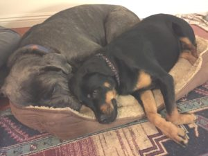 rio-and-daphne-1-share-bed