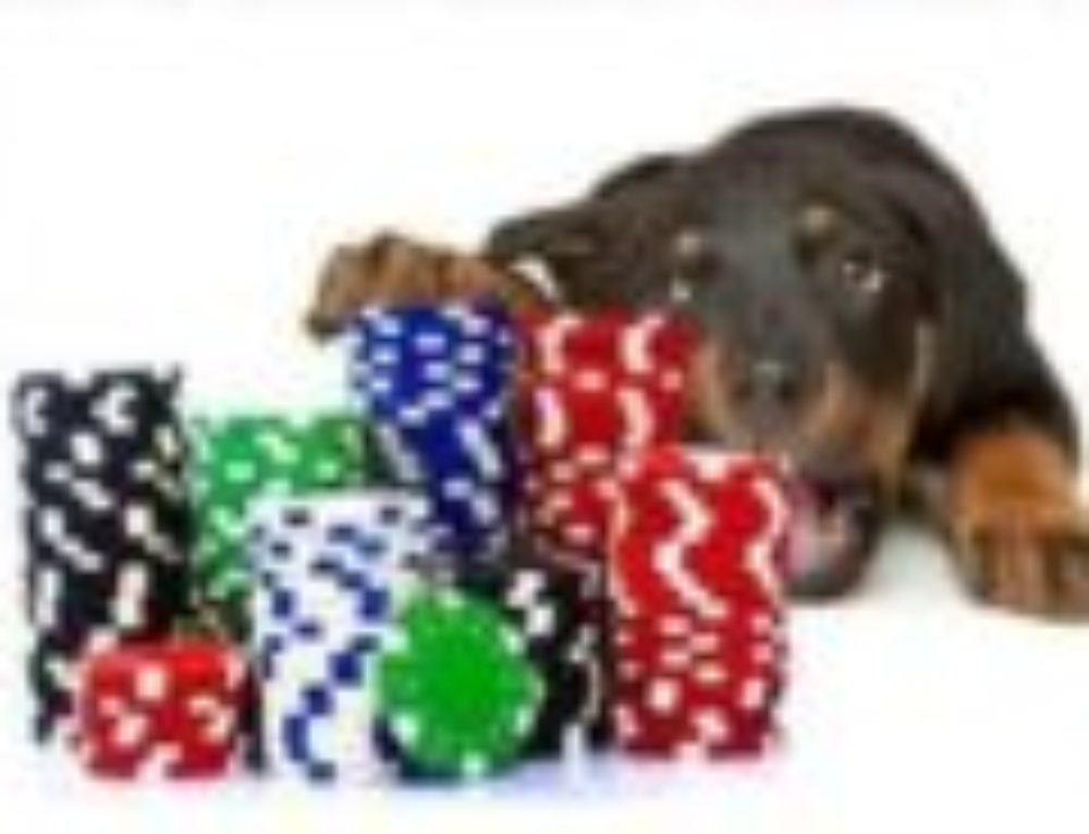 POKER FOR PUPPIES 2017