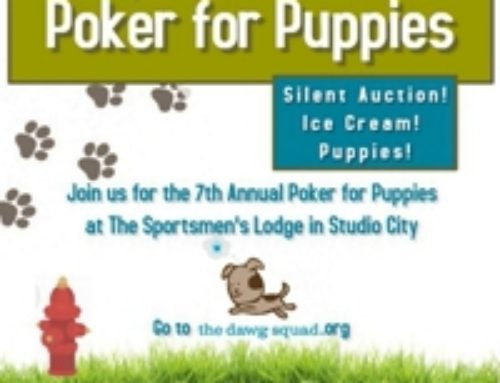 Poker for Puppies 2019