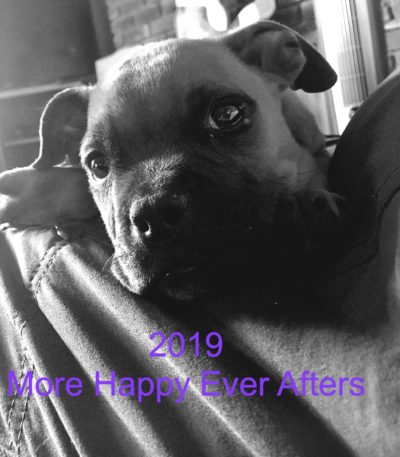 2019 is looking to be another stellar year. Thank you Dawg Squad adopters