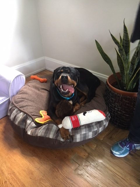 Raya is living it up with a fabulous new family who had a bed and a box of toys ready for her