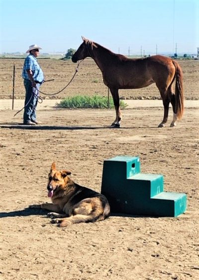 Colonel went from being homeless to living on a 5 acre horse property in Bakersfield. He is LOVING his new life
