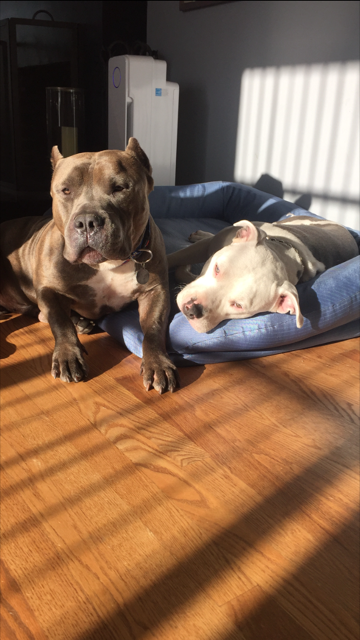 Big Daddy! We miss you but we know you love your new brother Ocho. Foster success!