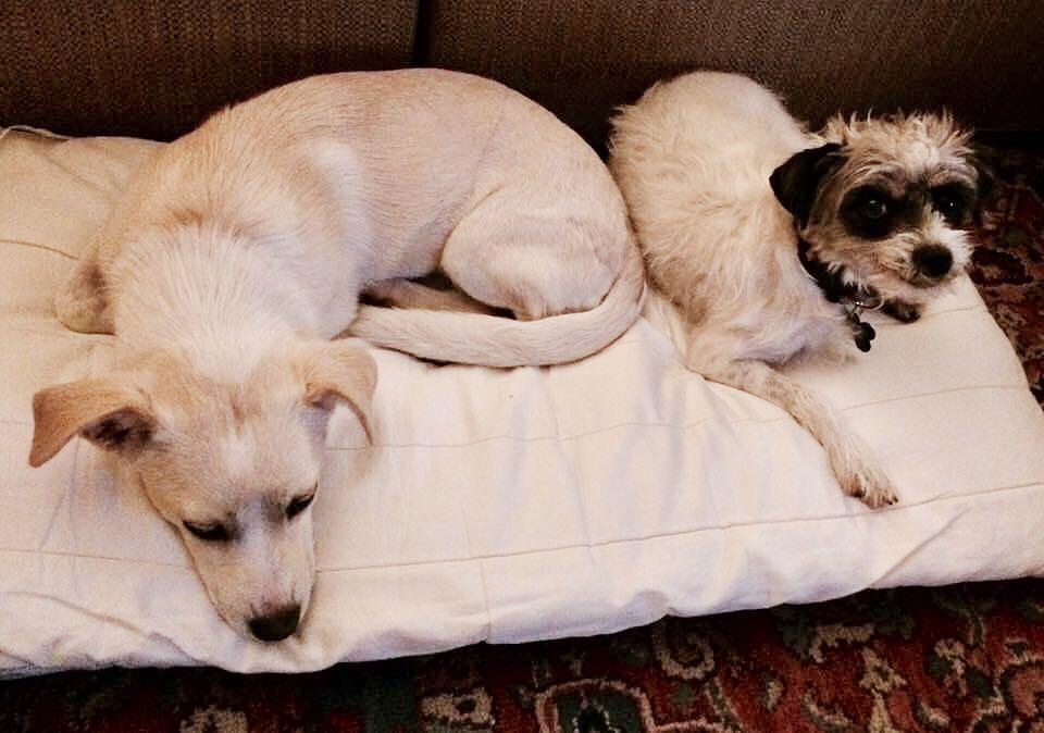 Zelda and Meryl found a home together. BFFs for life!