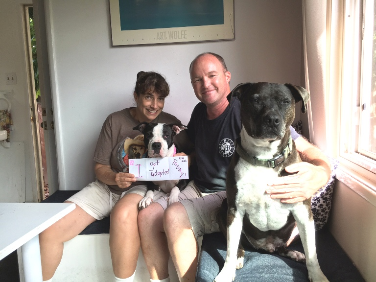 Napa lives with two other dogs and Dawg Squad volunteers in Los Angeles. Foster success!