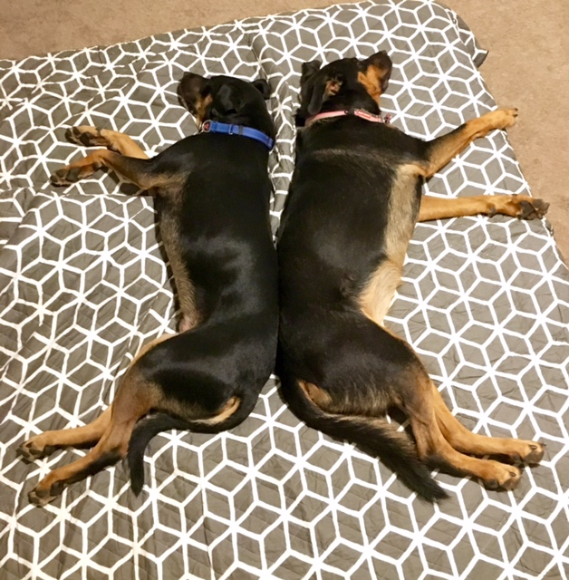Ranger and his new sister Suri. Too cute for words